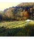 L'Huile Rituelle – Purifiante- Relaxante - Plantes et Potions