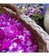 Eau de Roses Bio - Plantes et Potions